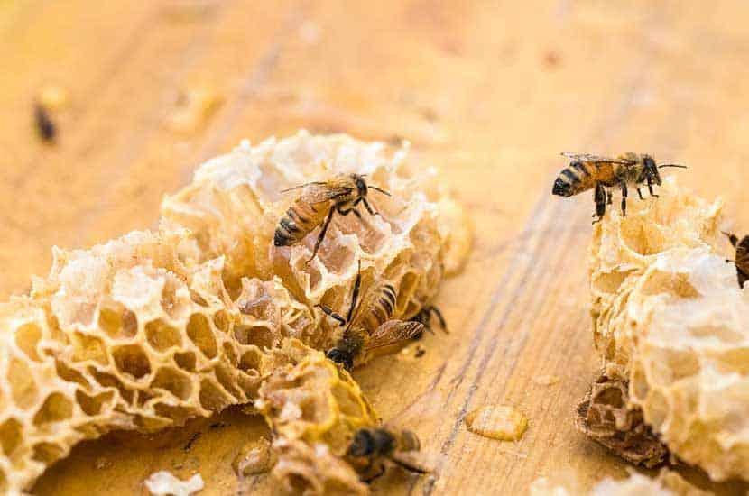 La cera de abejas tiene propiedades curativas, antiinflamatorias y antimicrobianas.