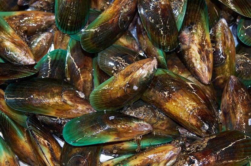 Los mejillones de labios verdes son ricos en vitamina B