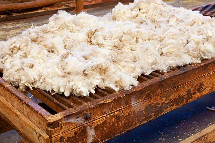 La lana es un derivado de la lana.