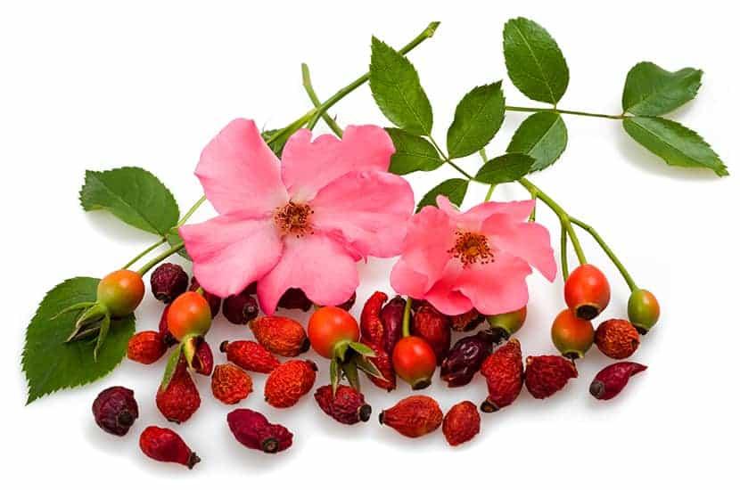 La rosa mosqueta puede ser útil para prevenir la diabetes y reducir el riesgo cardiovascular